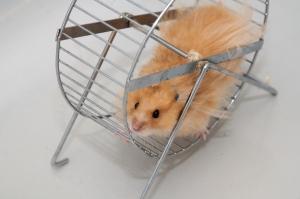 El Hamster y la Rueda