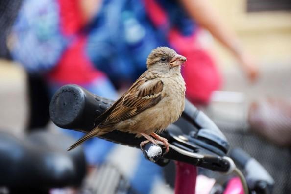 Gorriones y bicicletas